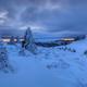 pine in winter - PhotoDune Item for Sale