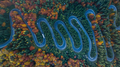 Curved road trough the forest - PhotoDune Item for Sale