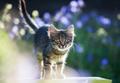 Kitty cat posing - PhotoDune Item for Sale