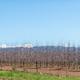 Farm landscape with espalier fruit trees - PhotoDune Item for Sale