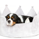 Cute dog resting in bed isolated on white - PhotoDune Item for Sale