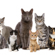 cats in a row - PhotoDune Item for Sale