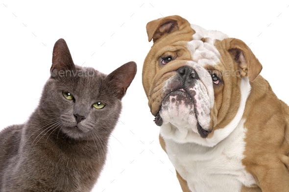 dog and cat - Stock Photo - Images