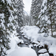 Turbulent river rapids in pictoresque forest during winter - PhotoDune Item for Sale