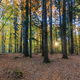 sunrise in forest - PhotoDune Item for Sale