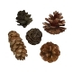 Pine Cone Pinecone Set Isolated on White - GraphicRiver Item for Sale