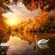 Swan on autumn pond - PhotoDune Item for Sale