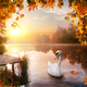 Swan on autumn river - PhotoDune Item for Sale