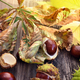 Chestnuts with dry leaves in sunshine on old wooden background - PhotoDune Item for Sale