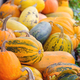 Harvest pumpkins. Different varieties of squashes and pumpkins - PhotoDune Item for Sale
