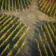 The shape of a vineyard - PhotoDune Item for Sale