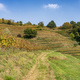 Vineyards in the Park of Curone at fall - PhotoDune Item for Sale
