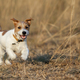 Puppy playing - happy pet dog running in the grass - PhotoDune Item for Sale