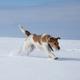 Dog in snow - PhotoDune Item for Sale