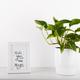 Pothos plant  - PhotoDune Item for Sale