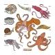 Shellfish Vectors - GraphicRiver Item for Sale