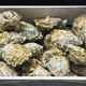 Oysters in a box - PhotoDune Item for Sale