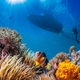 underwater seascape - PhotoDune Item for Sale