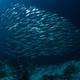school of sardines - PhotoDune Item for Sale