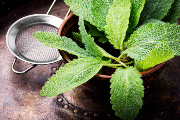Natural medicine,herbs - Stock Photo - Images