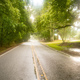 Georgia Farm Road Through Low Hanging Trees in the Rain - PhotoDune Item for Sale