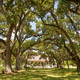 Old Growth Oak Trees Shade Plantation House Rural Louisiana - PhotoDune Item for Sale