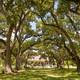 Old Growth Oak Trees Shade Plantation House Rural Louisiana - PhotoDune Item for Sale