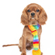 Puppy in the colorful scarf isolated on white - PhotoDune Item for Sale