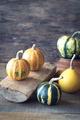 Variety of ornamental pumpkins - PhotoDune Item for Sale