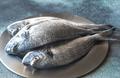 Sea bream (dorada) fish - PhotoDune Item for Sale