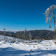 Winter pine tree forest destroyed, affected by a powerful snowstorm. Natural disaster - PhotoDune Item for Sale