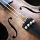 Close up of a violin with a broken string - PhotoDune Item for Sale