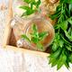 Hot herbal mint tea drink in glass mug - PhotoDune Item for Sale