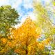 tops of aspen, birch, maple, hazel trees in forest - PhotoDune Item for Sale