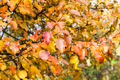 twigs of apple tree with red and orange leaves - PhotoDune Item for Sale