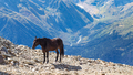 horse on the edge of a cliff in Dombay resort - PhotoDune Item for Sale