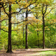 oaks on glade in forest in sunny october day - PhotoDune Item for Sale