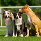 Dogs are sitting on the green grass on the background of a football goal - PhotoDune Item for Sale
