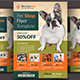 Pet Shop Flyer Template - GraphicRiver Item for Sale