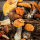 Autumnal wild forest edible mushrooms (boletus) in basket on rus - PhotoDune Item for Sale