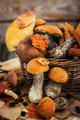 Autumnal wild forest edible mushrooms (boletus) in basket on rus - PhotoDune Item for Sale