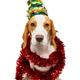 beautiful beagle dog in christmas tree hat - PhotoDune Item for Sale