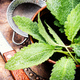 Cup of fresh herbal tea - PhotoDune Item for Sale