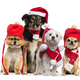 Dogs with christmas hat and scarf - PhotoDune Item for Sale