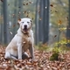Dog in autumn forest - PhotoDune Item for Sale