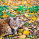 Wary cat in autumn - PhotoDune Item for Sale