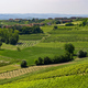 Road to Govone and San Martino Alfieri, Asti, in Monferrato - PhotoDune Item for Sale