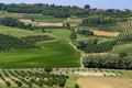 Vineyards near Govone, Asti, in Monferrato - PhotoDune Item for Sale