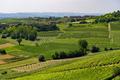 Road to Govone and San Martino Alfieri, Asti, in Monferrato - PhotoDune Item for Sale