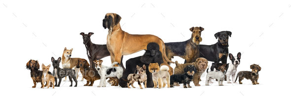 Large group of purebred dogs in studio against white background - Stock Photo - Images